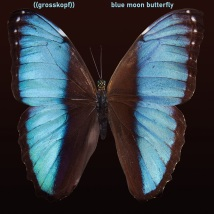 Coverart_Blue Moon Butterfly